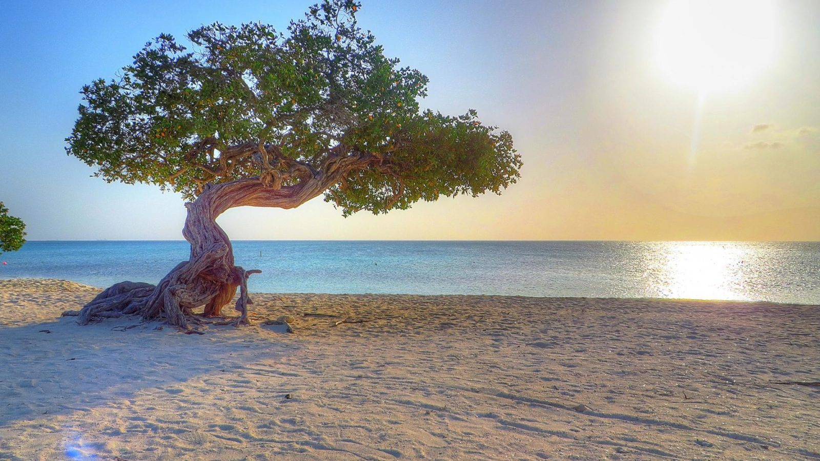 дерево Диви-Диви на пляже Игл-Бич в Арубе