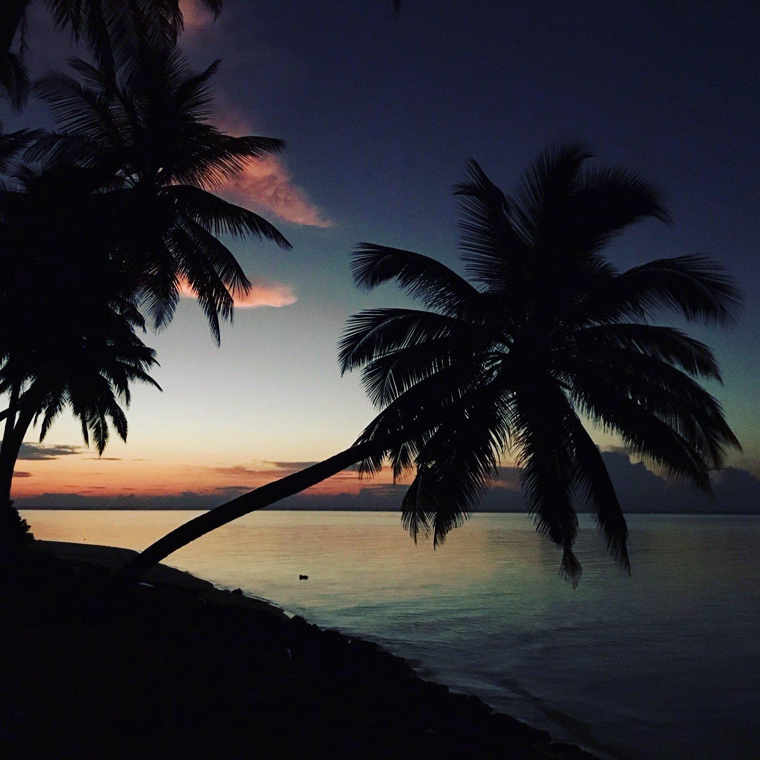 красивые пальмы на острове Мативери, Мальдивы