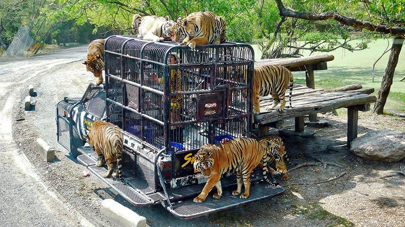 зоопарк Сафари-парк в Бангкоке