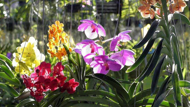 Сад орхидей в тайской деревне на Пхукете