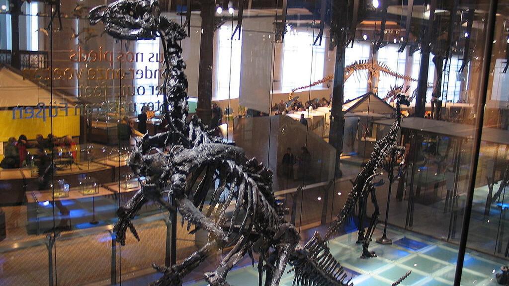 Музей естественных наук в Брюсселе