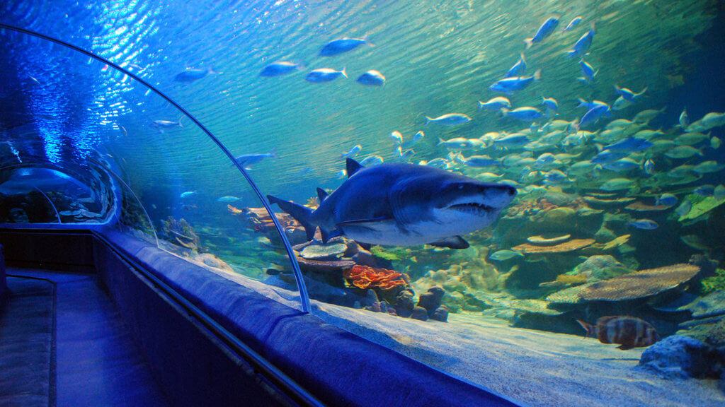 Стамбульский аквариум