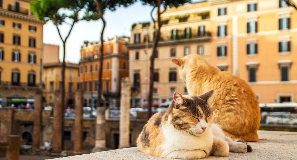 Римские кошки на площади Торре Аргентина