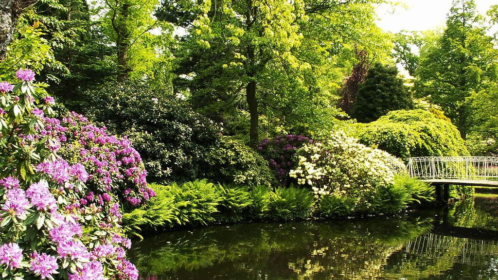Ботанический сад «Арборетум Тромпенбург» в Роттердаме