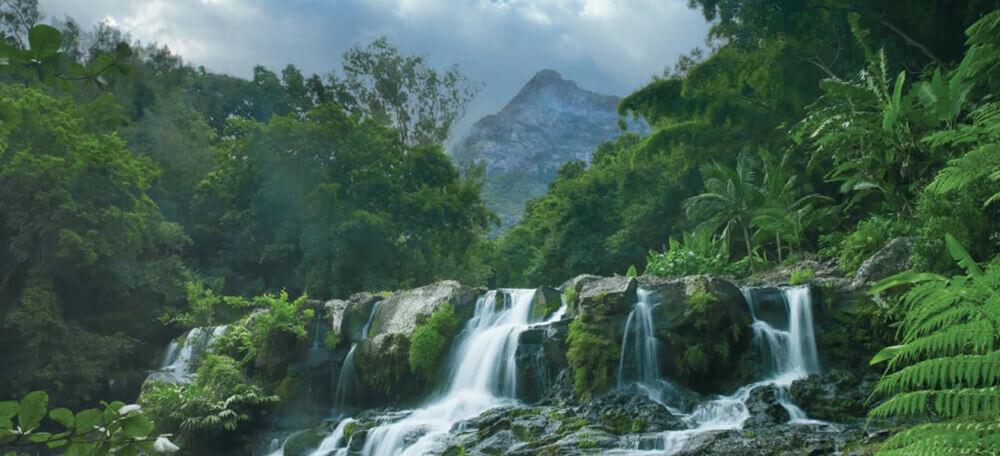 парк Ущелье Черной реки Маврикий